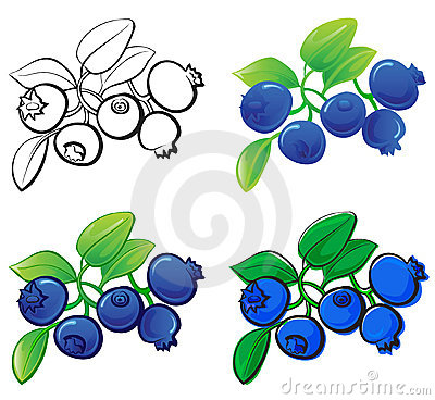 Blueberry Stock Illustrations.