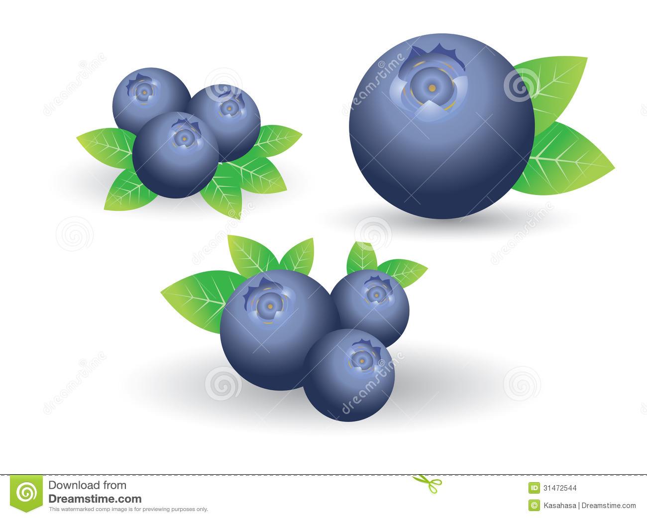 Clip Art. Blueberry Clipart. Stonetire Free Clip Art Images.