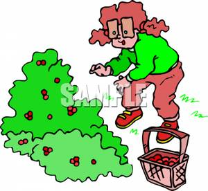 Cartoon of a Girl with Pigtails Picking Berries From a Bush.