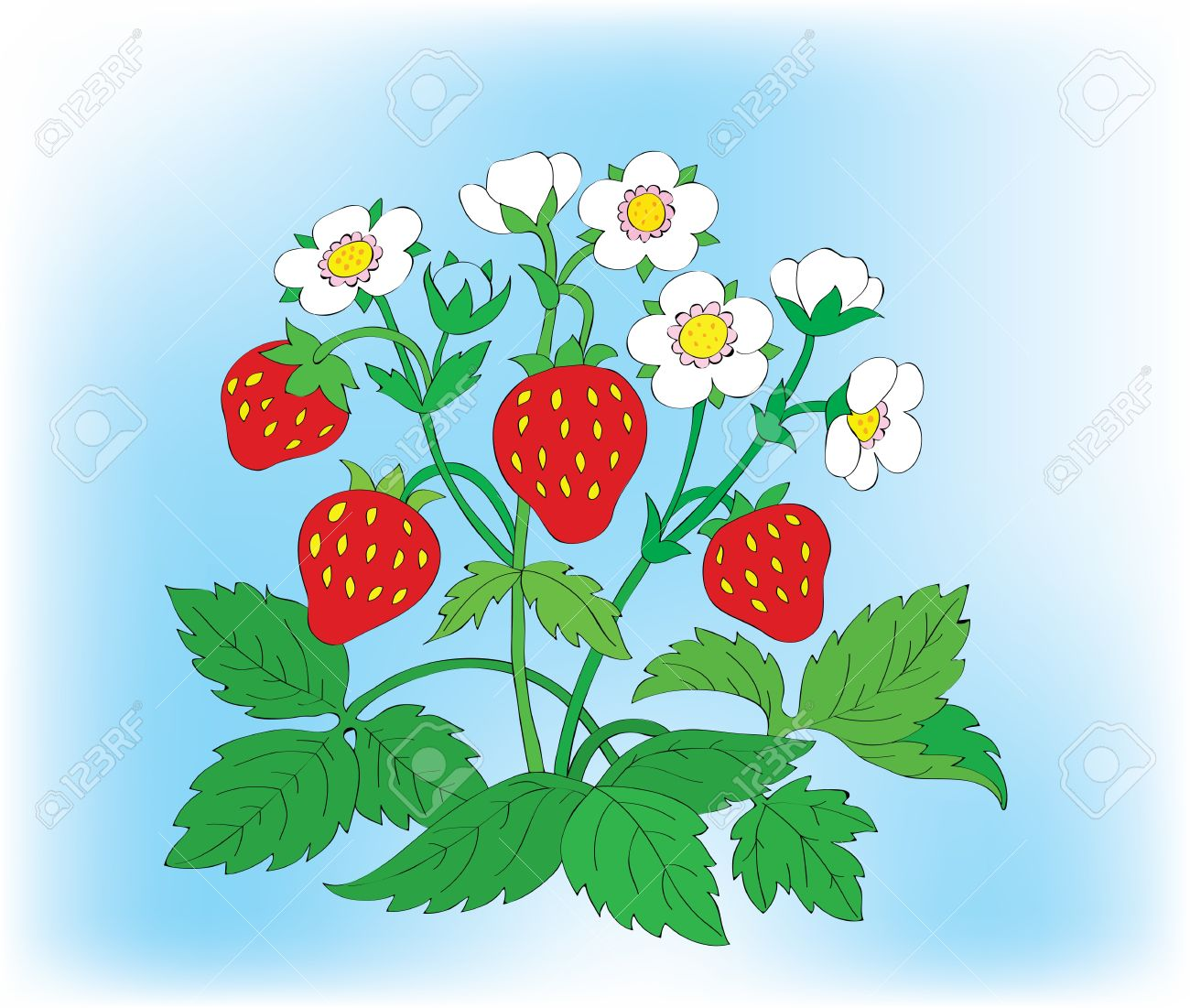 Bush Of A Blossoming Strawberry With Berries. Royalty Free.