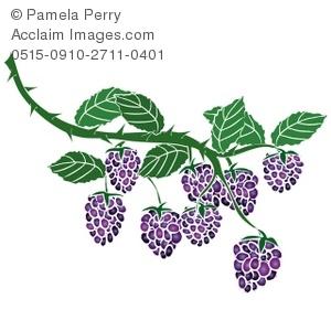 Clip Art Illustration of Blackberries on the Vine.