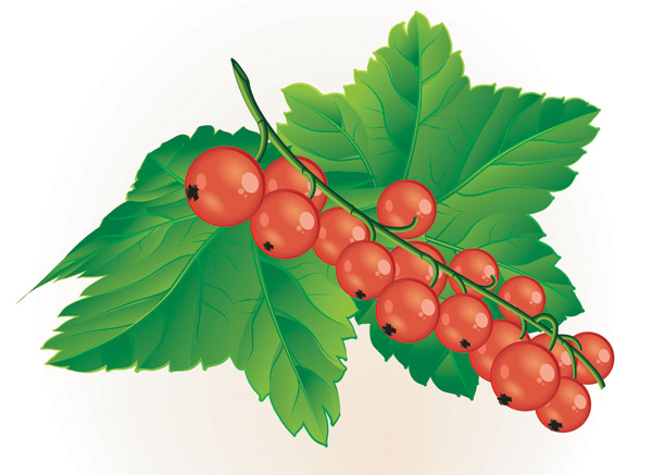Clipart berries.