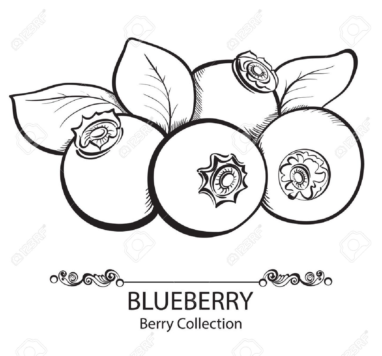 berry clipart black and white #3