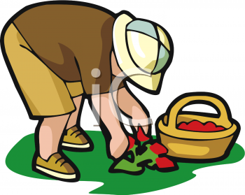 Berry picking clipart.