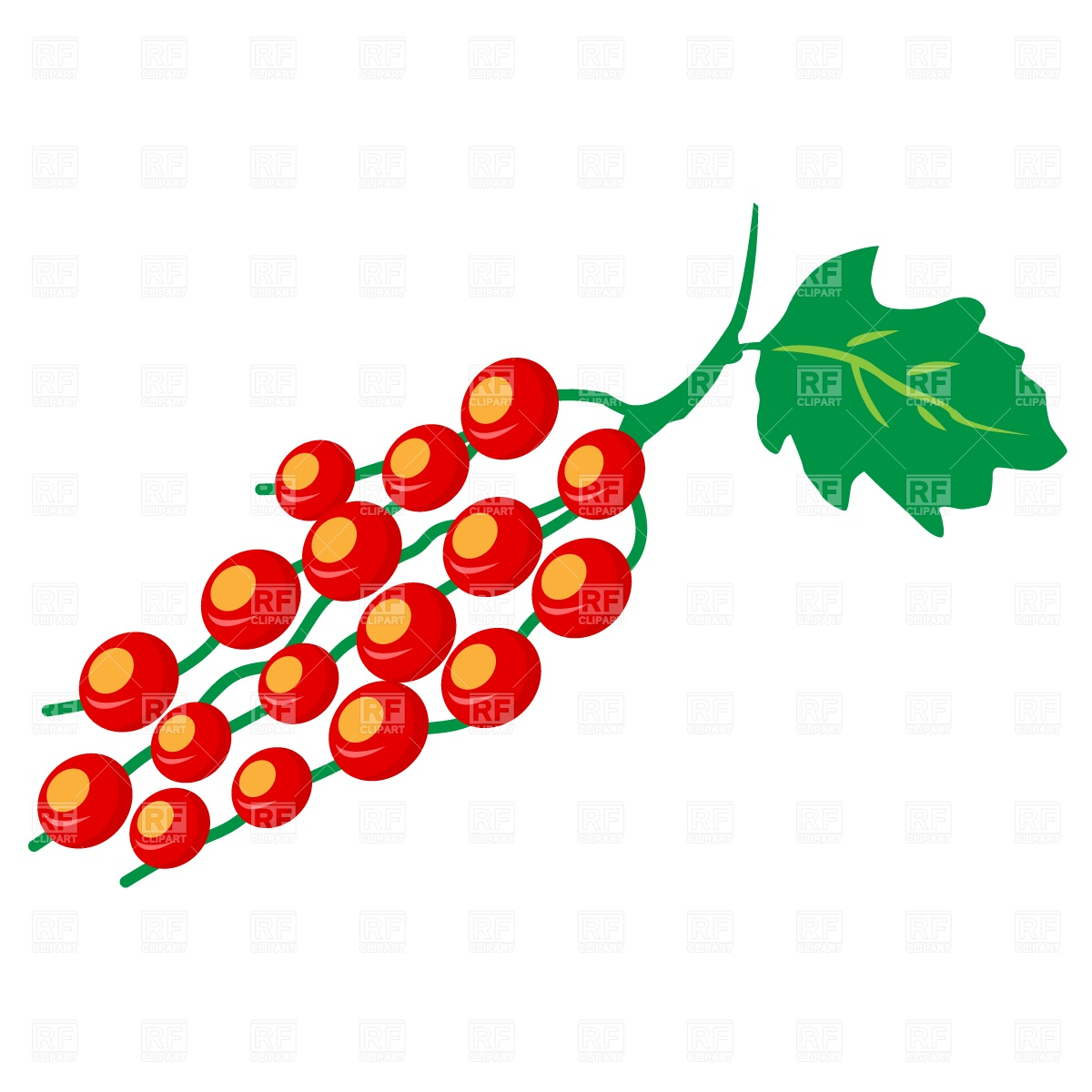 Red currant berry Vector Image #787.