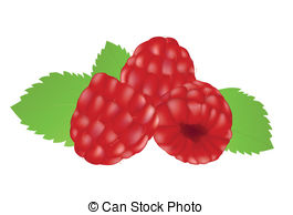 Isolated berry white red raspberry healthy objects fruit Stock.