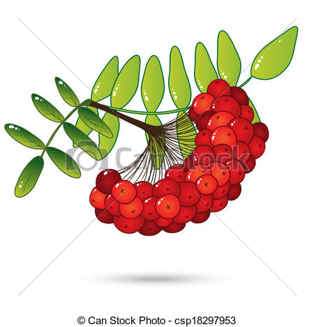 Clipart Vector of Bunch of red rowan berries with leaves isolated.