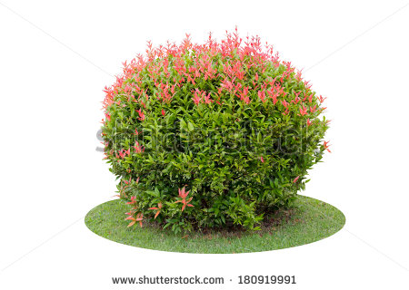 Shrubs Stock Images, Royalty.
