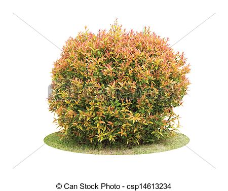 Shrub Stock Photo Images. 50,809 Shrub royalty free pictures and.