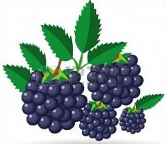 Free Blackberries Clipart.
