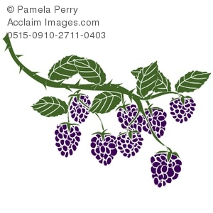 Clip Art Illustration of Blackberries on the Vine.