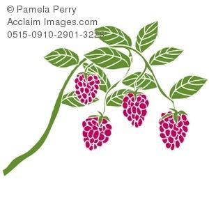 Clip Art Illustration of Raspberries on the Vine.