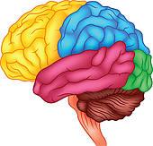 Brain Clip Art and Illustration. 32,211 brain clipart vector EPS.