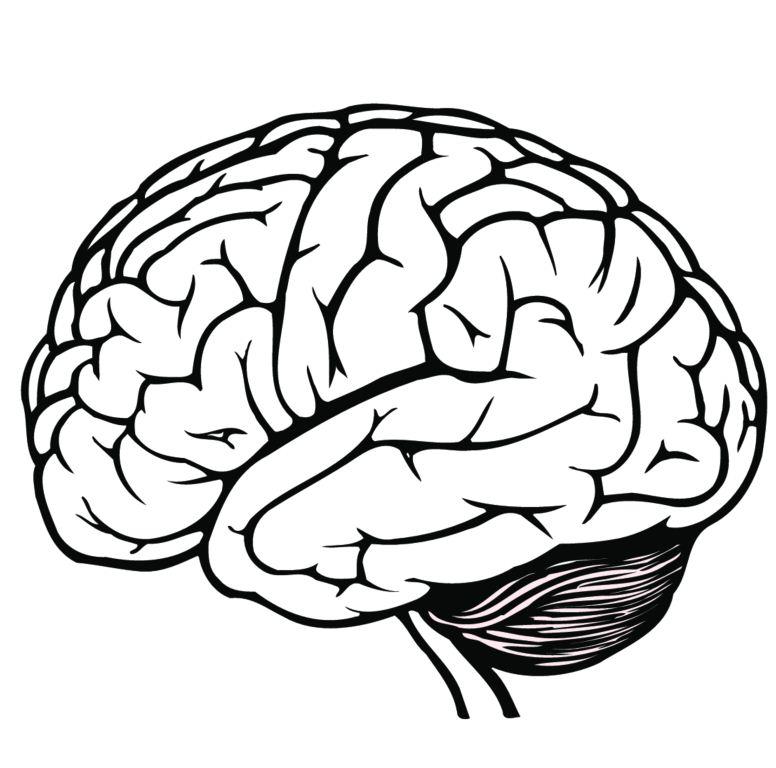 Brain clip art black and white.