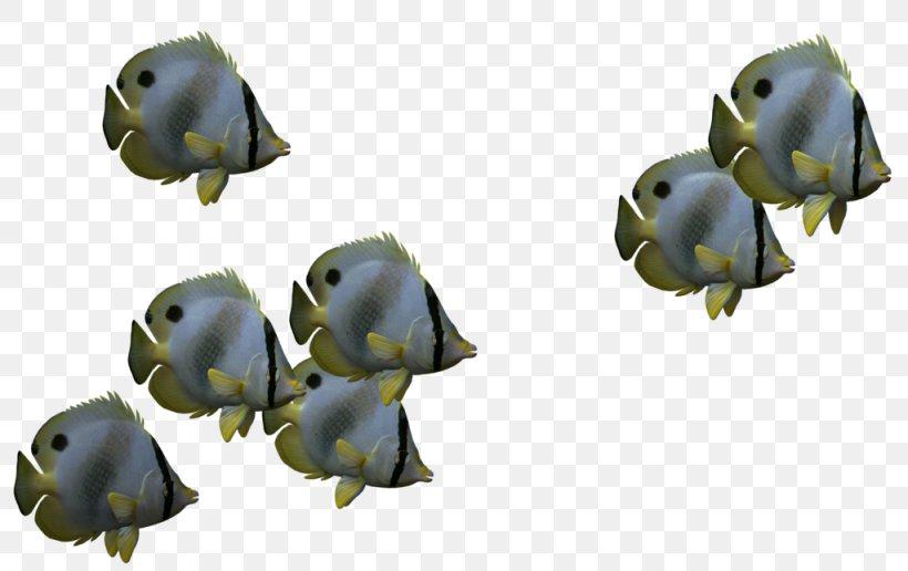 Fish Shoaling And Schooling Desktop Wallpaper, PNG.