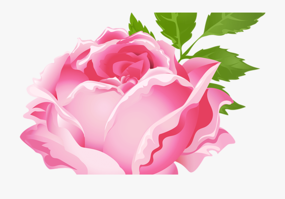 Pink Rose Clipart Free Download Best Pink Rose Clipart.