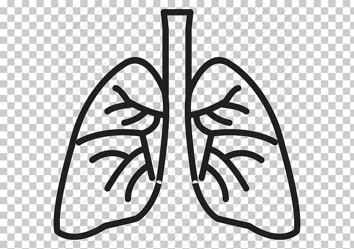 Lung Organ Computer Icons , Lung Best PNG clipart.
