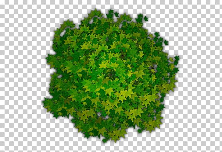 Tree Shrub , Photoshop Tree Top View , green leaf plant.