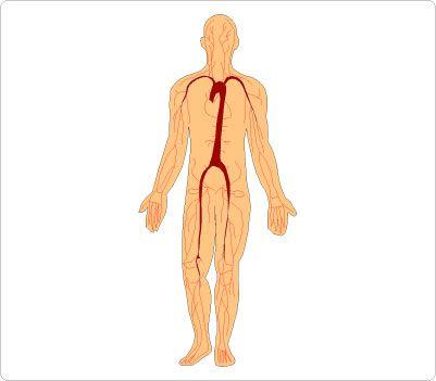 Human Body Clip Art.