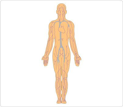 The best free Human figure clipart images. Download from.