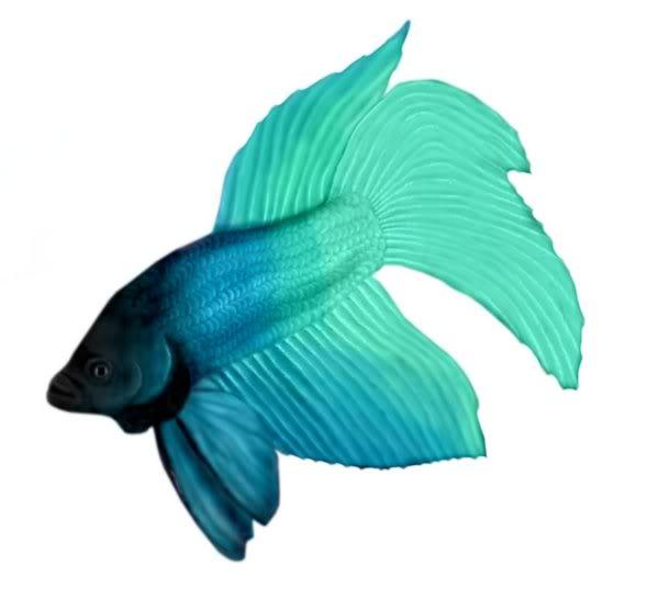 Beta Fish Clipart.