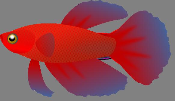 Beta fish clip art.