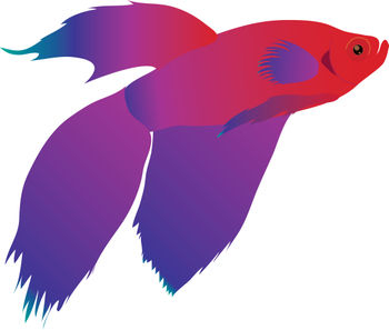 Beta Fish Clip Art.