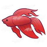 Betta Fish Live Clipart.