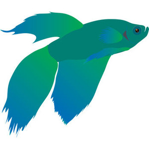 Betta Fish Clipart.