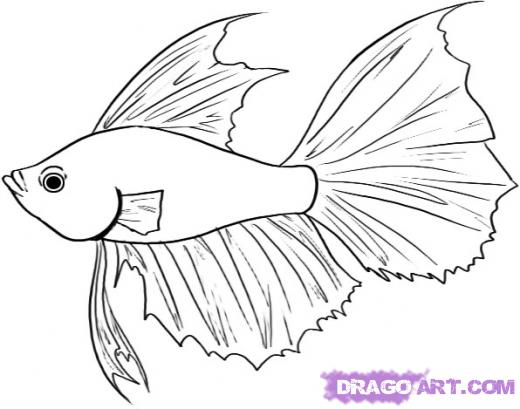 Betta Fish Clip Art.