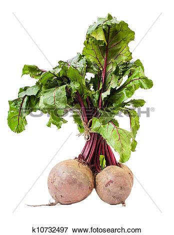 Picture of Beet root (Beta vulgaris) k10732497.