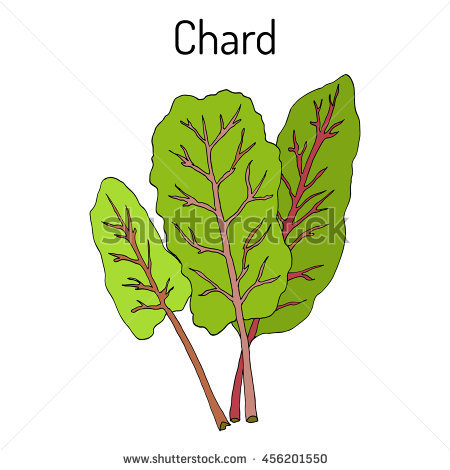 Swiss Chard Stock Photos, Royalty.