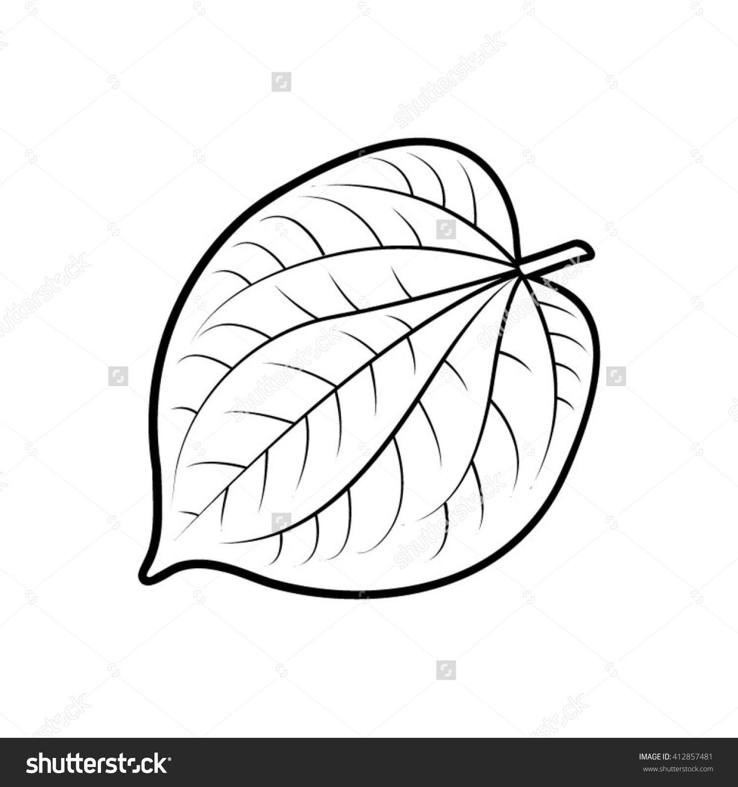 Betel leaf clipart.