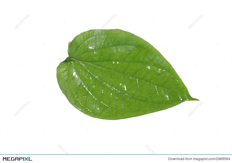 Betel Leaf Stock Photo 2968564.