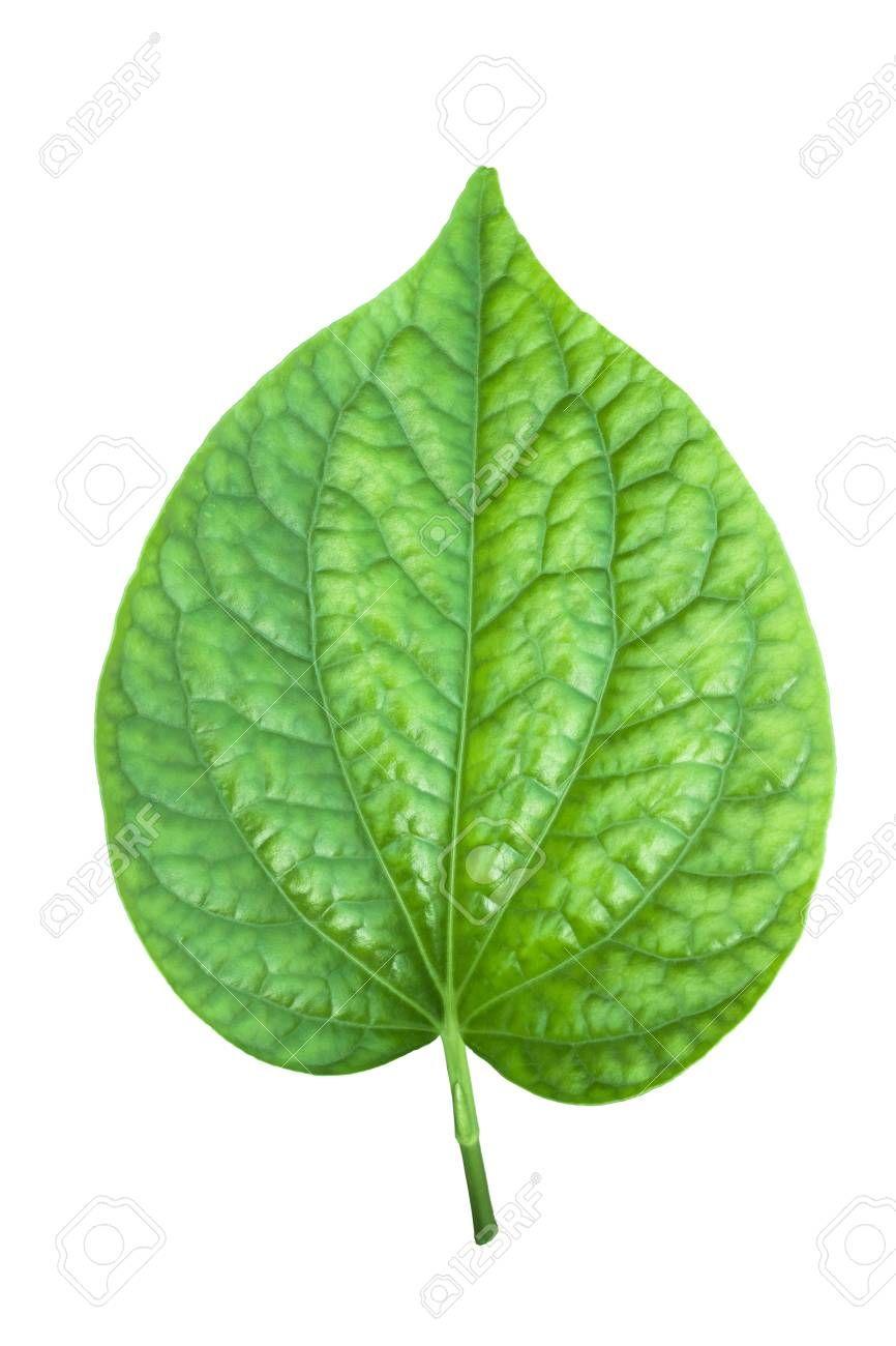 Clipart leaves pan leaves, Clipart leaves pan leaves.