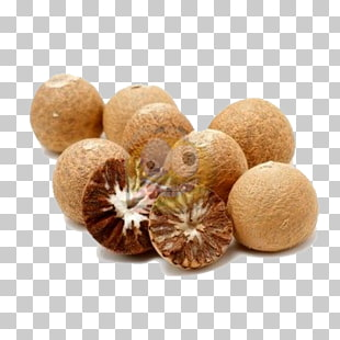 26 betel nuts PNG cliparts for free download.