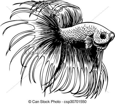 Clipart Vector of Betta splendens, Siamese fighting fish.