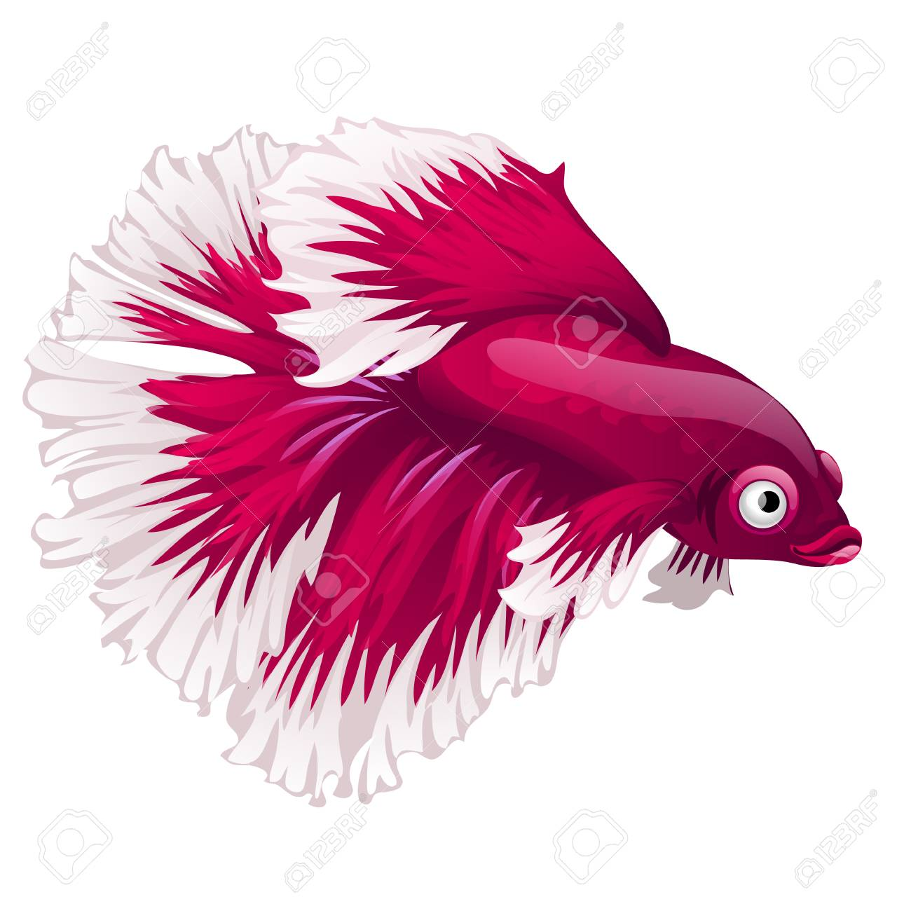 Cartoon pink betta fish, siamese fighting fish, betta splendens...