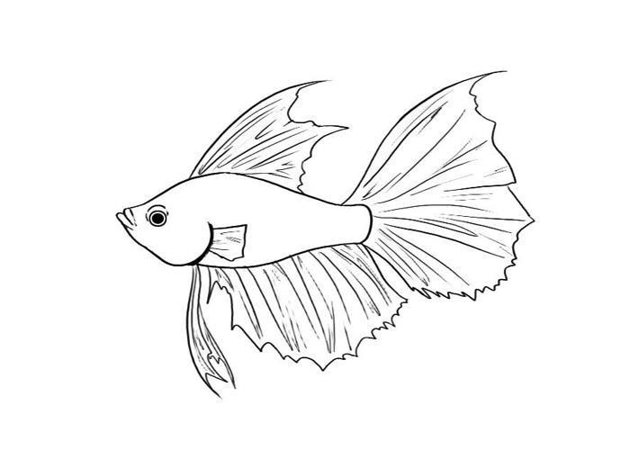 71+ Betta Fish Clip Art.