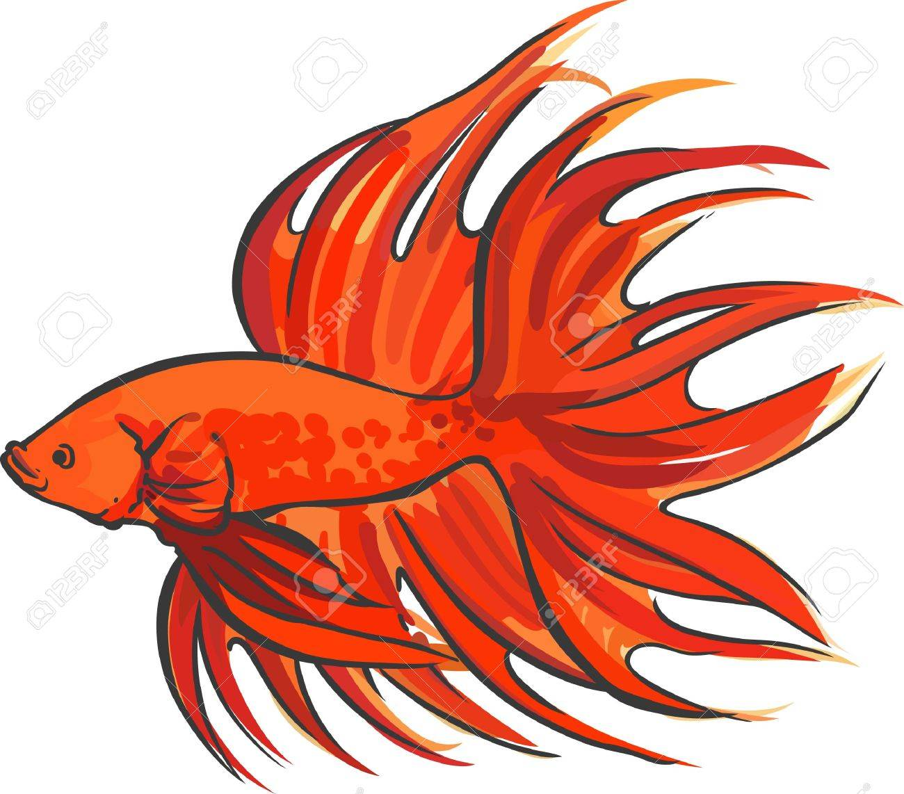 Beta Fish Clipart & Free Beta Fish Clipart.png Transparent.