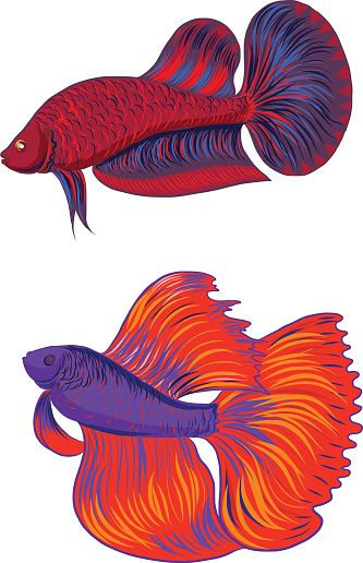 Siamese Fighting Fish Clip Art, Vector Images.