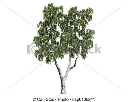 Betula Clip Art and Stock Illustrations. 44 Betula EPS.