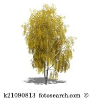 Betula Stock Illustrations. 17 betula clip art images and royalty.