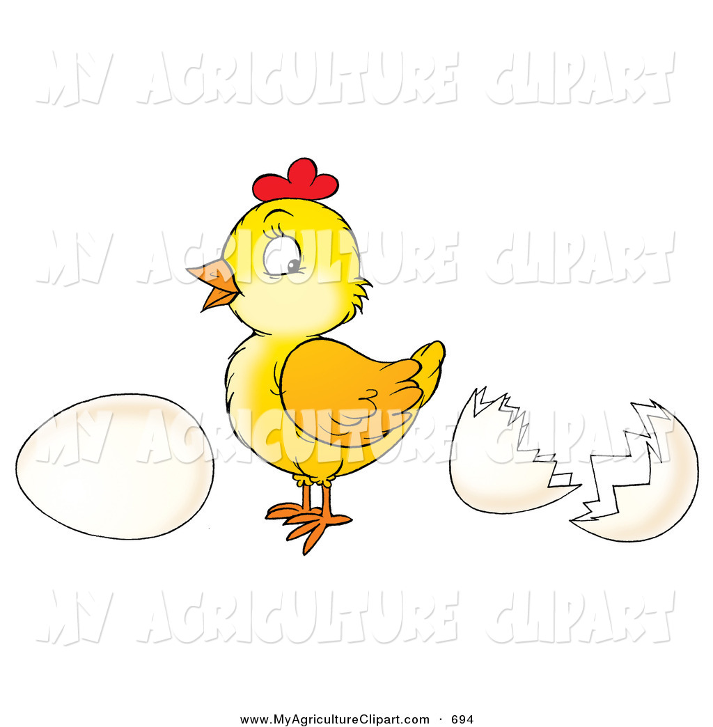 Agriculture Clipart of a Cute Yellow Baby Chicken Standing Between.