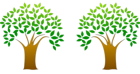 Rebel Science News: The Two Olive Trees and the Yin.
