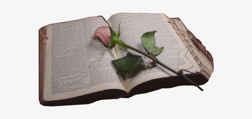 Biblia Png Sin Fondo.