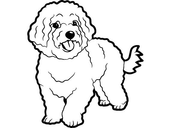 The best free Bichon drawing images. Download from 46 free.