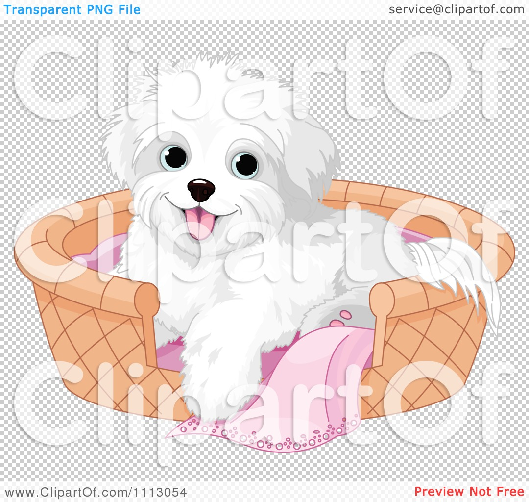 Clipart Cute Bichon Frise Maltese Puppy Dog In A Basket Bed.