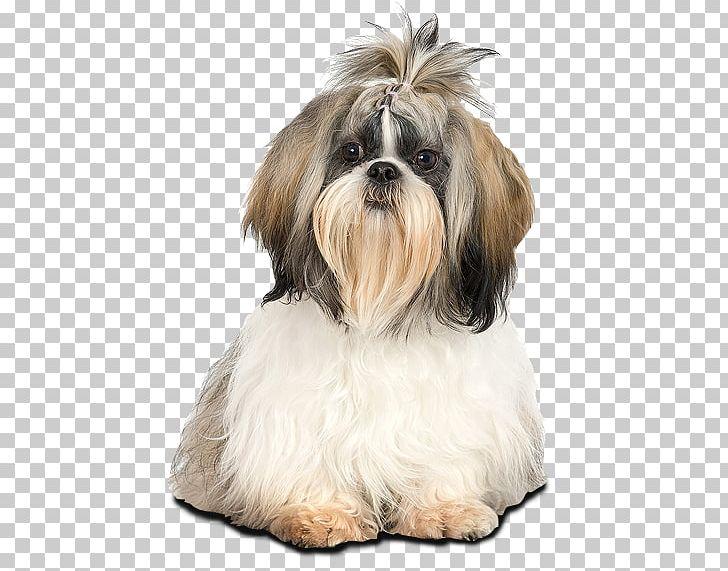 Shih Tzu Lhasa Apso Bichon Frise Maltese Dog Puppy PNG.