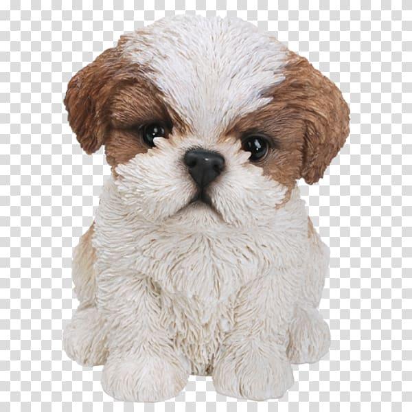 Shih Tzu Puppy Bichon Frise Poodle Yorkshire Terrier.